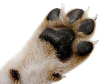 Dog Nail Care Tips 118